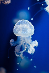 Group of light blue jellyfish on blue background