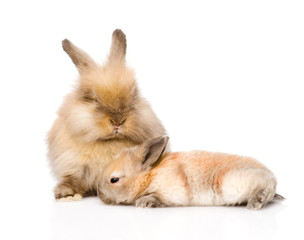 Two cute rabbits. isolated on white background