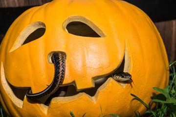 Snake and Jack-o-Lantern
