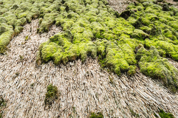 Closeup of a thatched roof covered with earth and moss