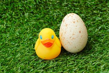 яйцо и утка