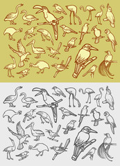 Bird icons sketch and vintage style
