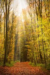 Wald im Herbstlicht