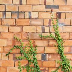 Green leaf on the brick