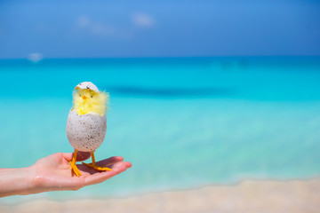 Small yellow chicken on the white beach