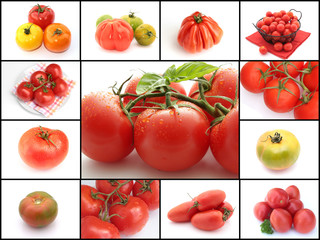 collage tomates