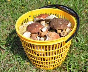Detailed view of fresh mushrooms