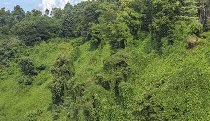 jungle botanical garden in Batumi