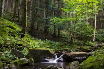Cascata al Parco Nazionale delle Foreste Casentinesi