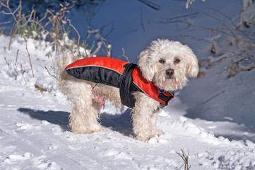 The dog in winter on snow
