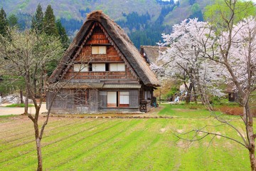 Japan village - Shirakawa-go