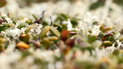 macro stone vegetation polar leaf summer