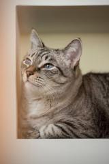 Tabby cat home