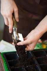 Woman preparing seedlings