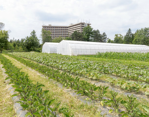 Organic Farm in Urban setting