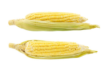 Two corn isolated on white background
