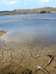 Lago com terra rachada e flamingos