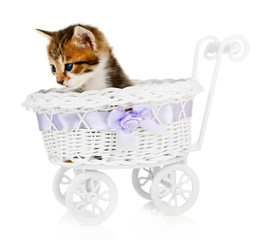 Cute little kitten in stroller isolated on white