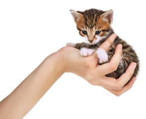 Cute little kitten in hand isolated on white