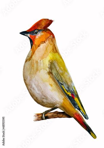 watercolor drawing of bird - 68935141