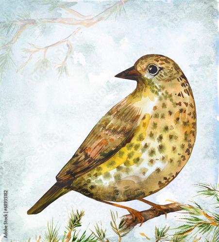 watercolor drawing of bird - 68935182