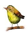 watercolor drawing of bird