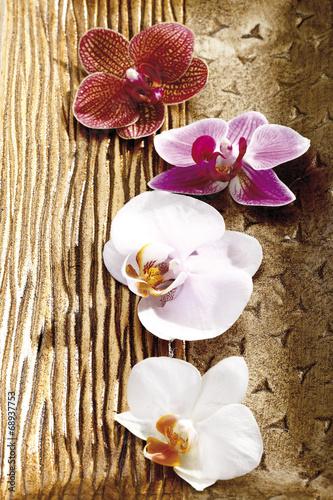 canvas print picture OrchideenBlüte, Blüten, Blumenn (Orchidaceae)