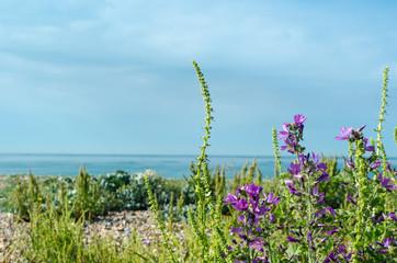 Coastal Flora - Southern England
