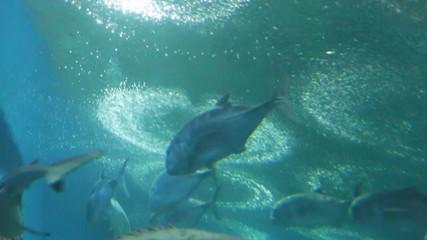 group of sea-fish in aquarium