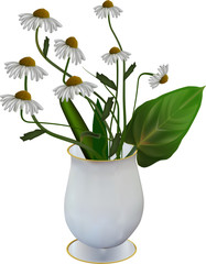 chamomile flowers in vase isolated on white