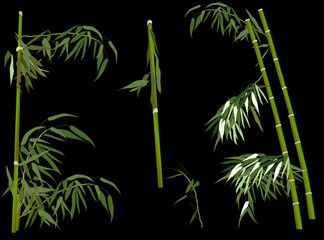 green bamboo collection on black background
