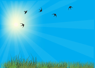 swallows in blue sky above green grass