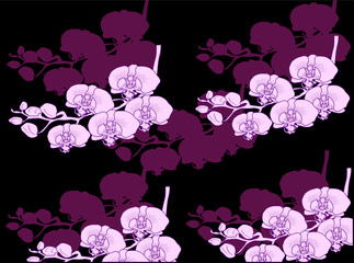 lilac and pink orchids background