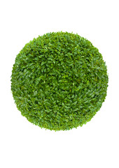 ball of green leaves isolated on white