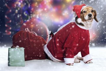 Mascota navideña / Christmas pet