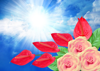 Roses and anthurium flower on sky background