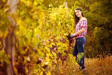 winegrower in the vineyard