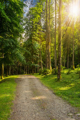going to deep forest in sunlight