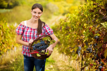 woman in vineyard with basket of grapes