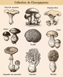 Mushroom collection with french text - 68946999