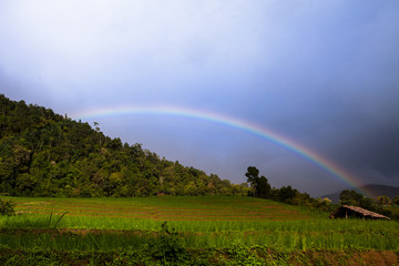 rainbow rises over the Rice fields on terraced.