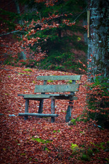 Bench in a red leaves forest