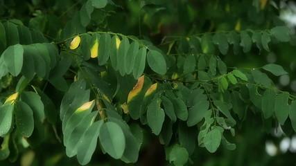 Rain wind leaves