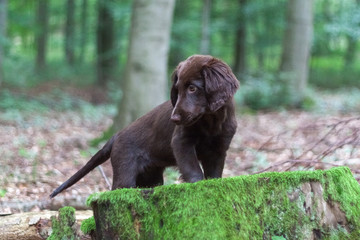 Welpe im Wald