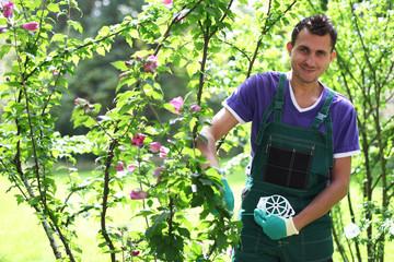 freundlicher Gärtner neben einem Rosenstrauch