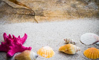 colorfull Sea shells sand board