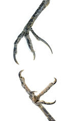 bird claws