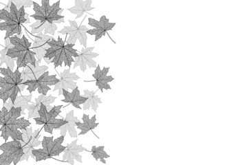 Dry autumn maple leaves silhouettes background