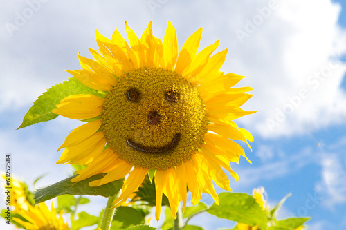 Foto op Canvas Zonnebloem Sunflower face