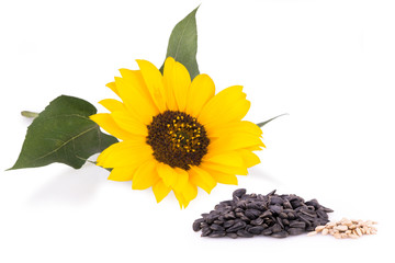 Sunflower and seeds isolated